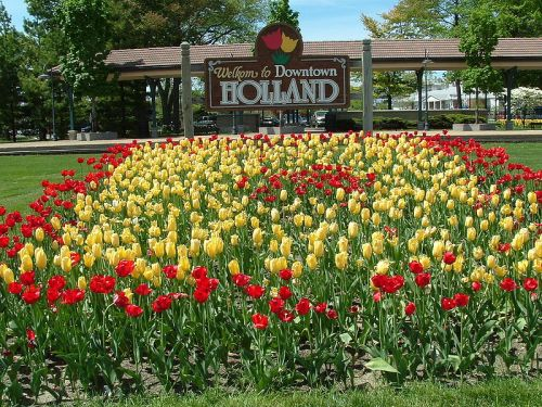 800px-Holland_MI_Tulips_01
